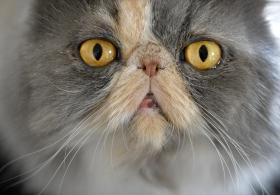 Det är sant som dom säger: katter gör dig glad