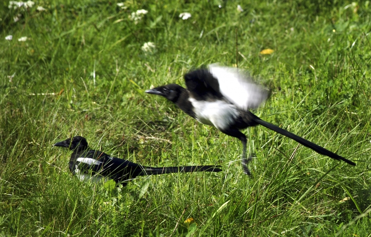 Kan djuren hantera klimatflyktingar?